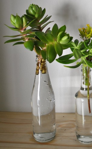 Clear small glass bottles